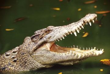 Alligator attack suspected in senior living resident death