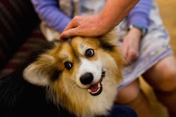 'Pet therapy' could be putting residents, others in danger