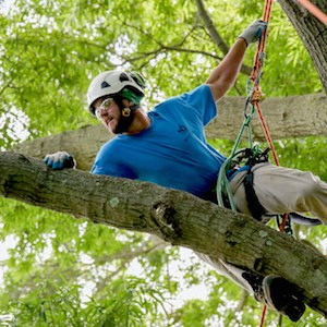 A professional arborist demonstrates his tree-climbing techniques June 10 at the Robert A. Winters Arboretum at Meadow Lakes.
