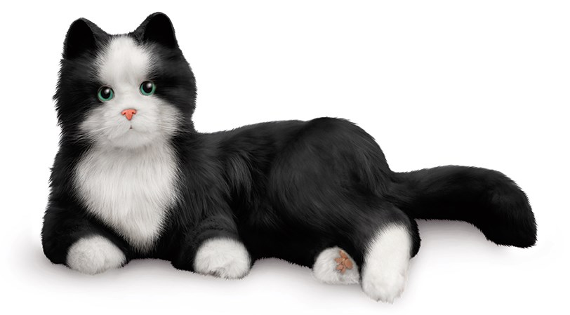 Ageless Innovation introduces Tuxedo Cat